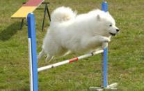 Športy pre psov - nechajte športovať vašeho psíka