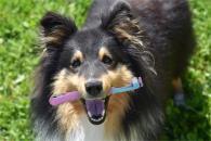 Ako správne čistiť psovi zuby