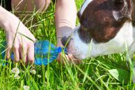 Horúčavy so psom, zdravotné riziká, dostatok tekutín, rizikové skupiny