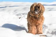 Praktické rady, ako sa postarať o psíka v zime