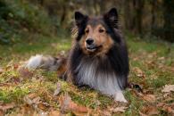 Rady, ako ochrániť svojho psa pred vonkajšími parazitmi