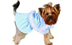 Vyberáme oblečok pre psa