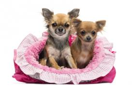 Jaký vybrat psí pelech