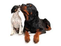 Ako rozdeľujeme psov podľa veku?