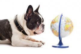 Čriepky o psíčkaroch z celého sveta/Pes a jeho majiteľ naprieč kontinentmi