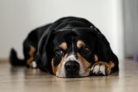 Jak poznat, jestli je náš pes nemocný