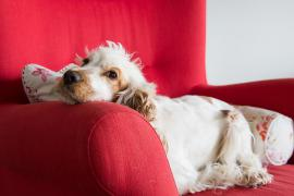Starostlivosť o obézneho psa