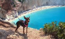 Pes a dovolená - co je nutné vědět