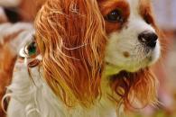 Ztráta psa, co dělat, když pejska ztratíme nebo jej najdeme