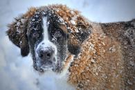 Nebojte se vzít svého pejska na zimní dovolenou