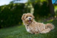 Na co všechno může být pes alergický?
