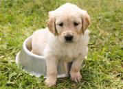 Jak naučit malé štěně čůrat venku