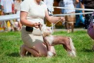 Cenné rady, ako postupovať na výstave psov