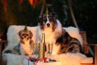 Rady, ako upokojiť psa na Silvestra