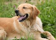 Jakými způsoby můžeme označit svého psa