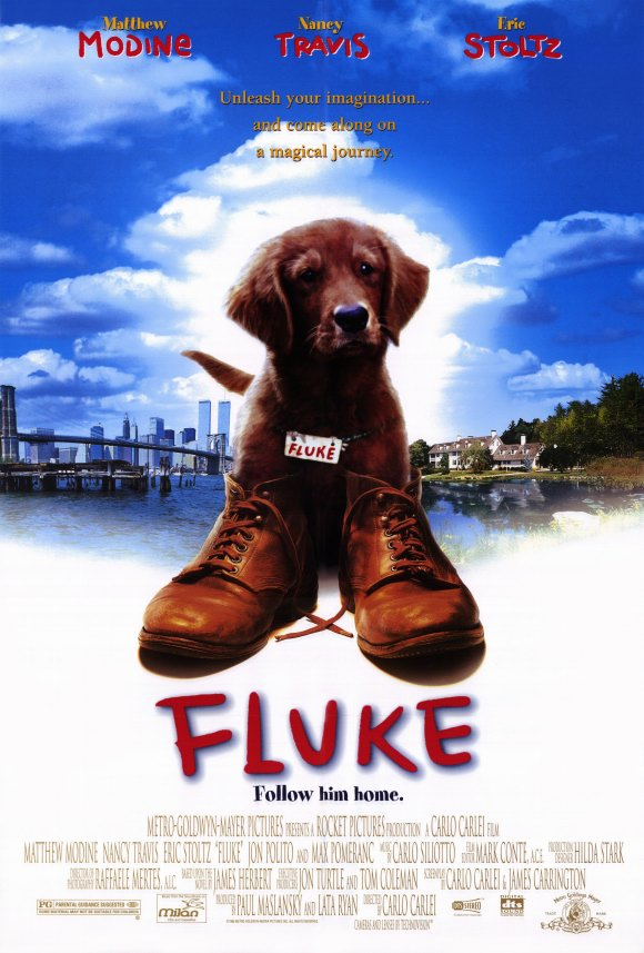 "Flat Coated Retriever ve filmu ""Fluke"""