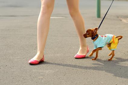 Na prechádzke so psíkom
