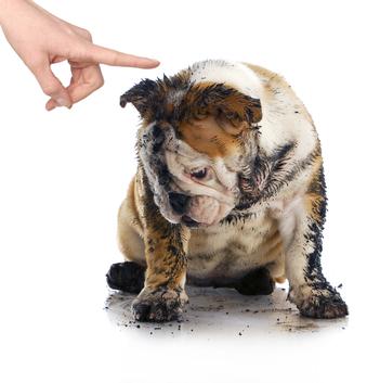 Špinavý a smutný pes