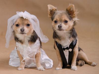 Psí ženích a nevesta