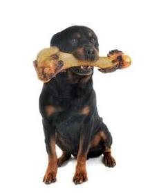 Pes s kosťou