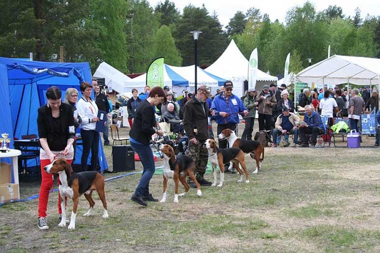 Výstava psů