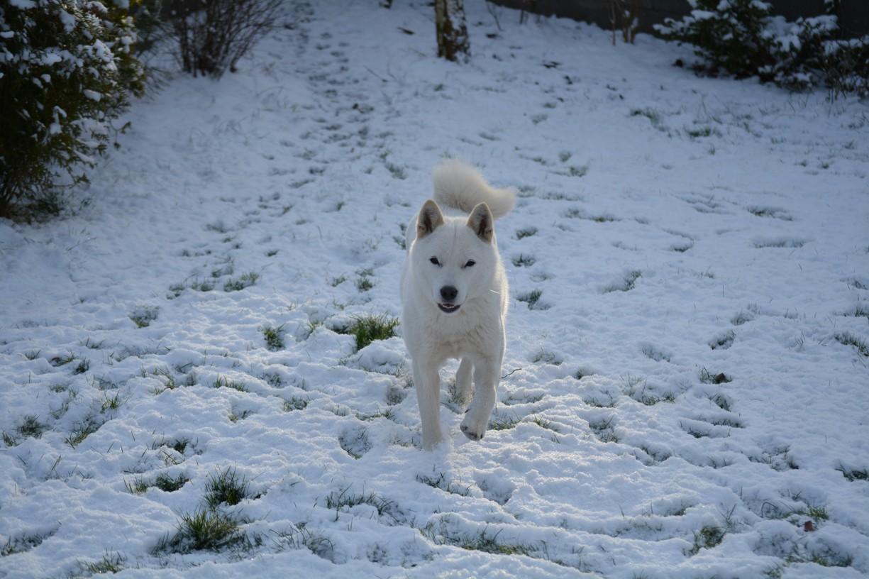 Hokkaido ken v zimě