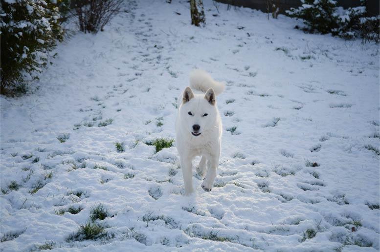 Hokkaido ken v zime