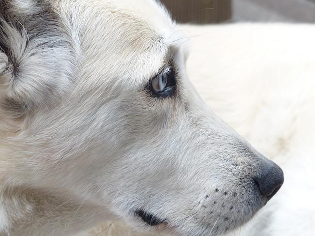Nemocný a smutný pes