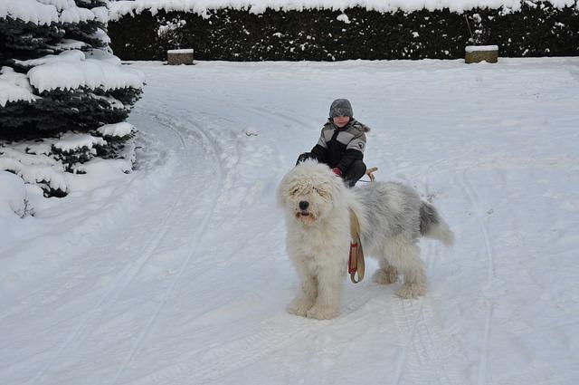 Pes na procházce v zimě