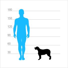 1041c44b6d3 Bretaňský ohař dlouhosrstý - atlas psů