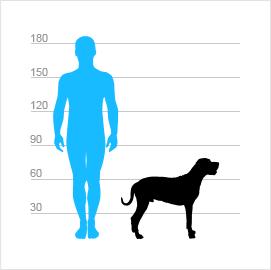 porovnání velikostí