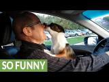 Výlet v autě si každý pejsek pořádně užije.