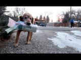 Užitečná práce, jako je roznášení tiskovin, je určena i psům!