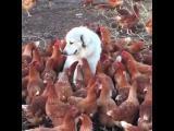 Někdy se duše dostane do špatného těla, platí to i u zvířat.