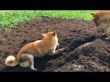 Schválně, jaké plemeno psů považujete za vůbec nejčistotnější?