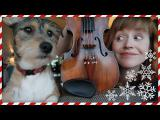 K vánočním svátkům patří i zpívání koled, pejsek to dobře ví!