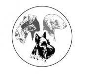 Speciální výstava jack a parson russell teriérů